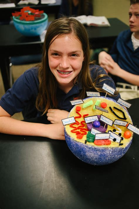 7th Grade Cell Project | Brook Hill School | Tyler, TX