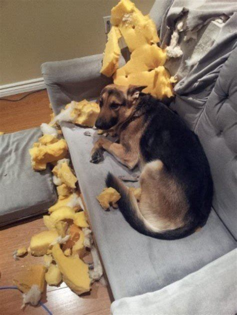 13 Guilty Dogs Who Claim They Have NO IDEA How That Mess
