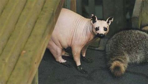 These 17 Bald Animals Will Blow Your Mind