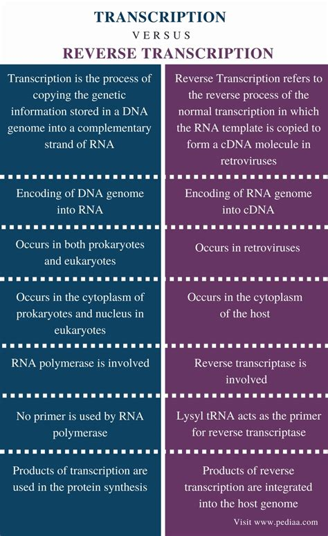 Difference Between Transcription and Reverse Transcription