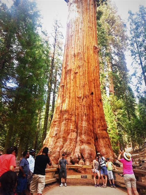 Sequoia National Park In One Day- Mountain of Joy